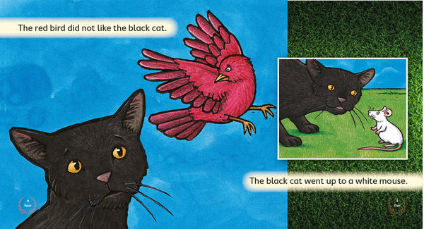 The Black Cat 6-pack (Level 3)
