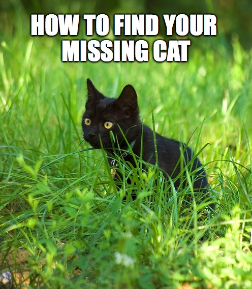 5 Tips for finding your lost cat