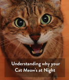 Why is your Cute Little Cat Meowing so Much at Night?