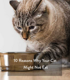 10 Reasons Why Your Cat Might Not Eat