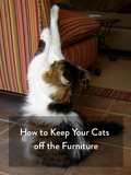 Keeping Your Cats Off The Furniture