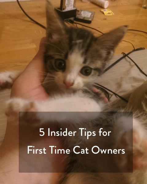 Five insider tips for first time cat owners!