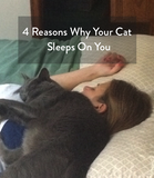 Four Reasons Why Your Cat Sleeps on you