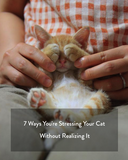 7 Ways You're Stressing Your Cat Out Without Realizing It