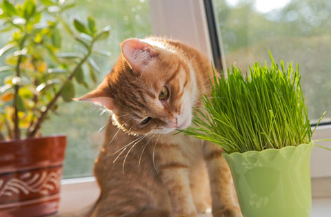 cat smelling plant