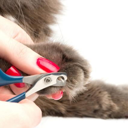 Trimming claws