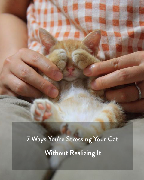 7 ways you're stressing your cat with out realizing it