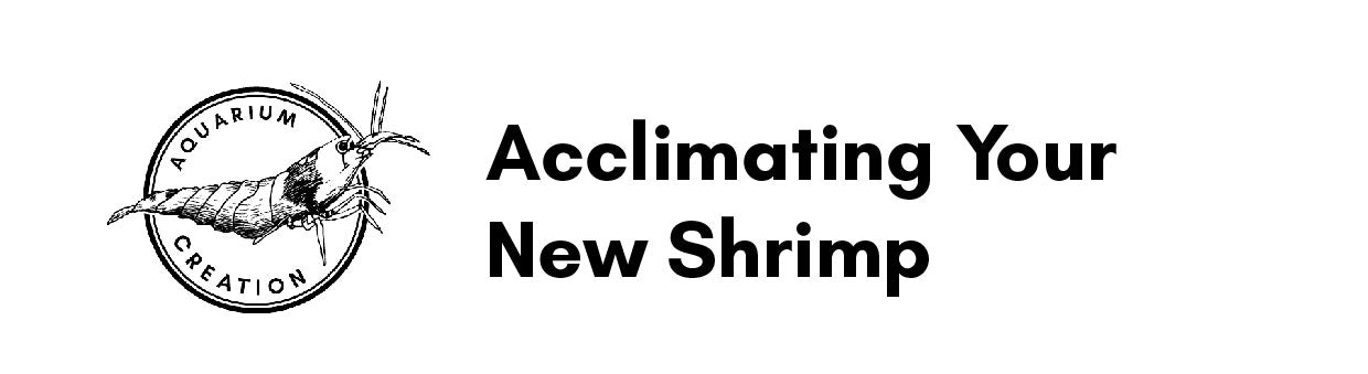 Instructions On Acclimating Your New Shrimp