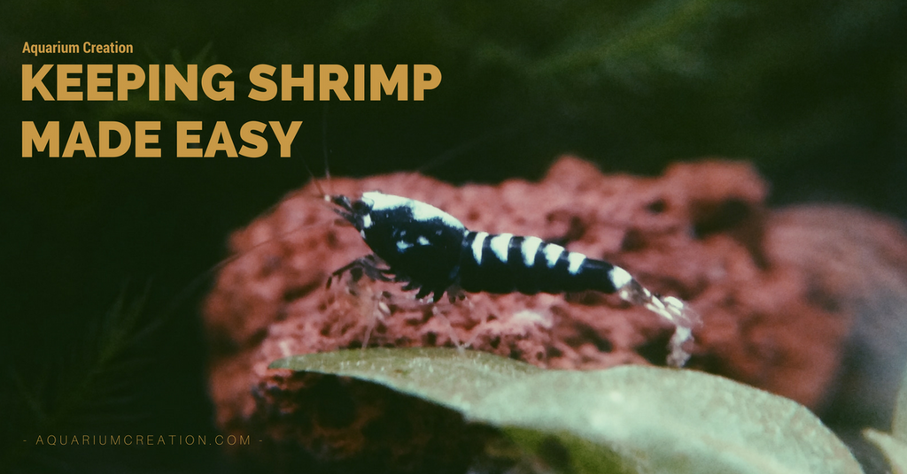 Setting up your first shrimp tank
