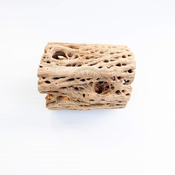 Cholla Wood - Teddy Bear & Regular - Woods, Leaves, Natural Products - Aquarium Creation