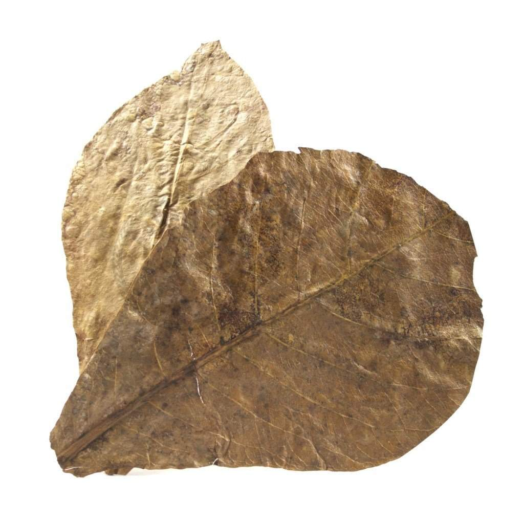 Woods, Leaves, Natural Products - Grade A Indian Almond Leaves (Large & Small)