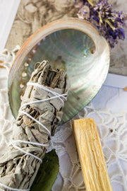 Palo Santo and white sage in an abalone shell.