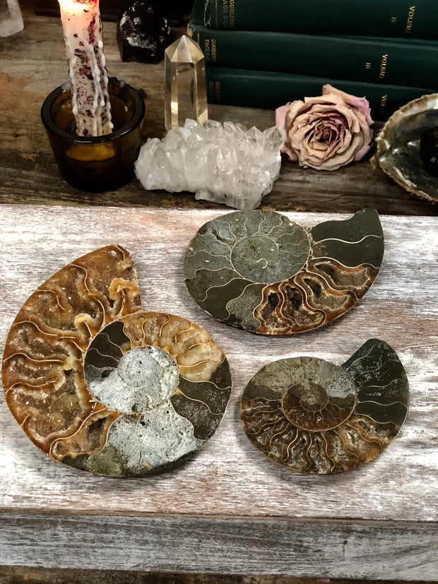 Three ammonite fossils displayed on with crystals and candles.