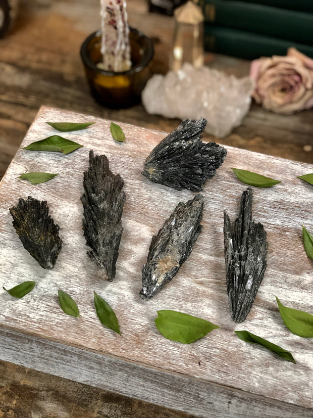 Five Black Kyanite Fans displayed between loose green leafs.