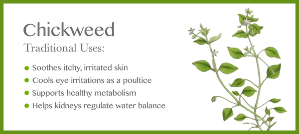 Chickweed Traditional Uses