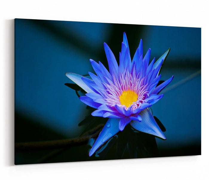Beautiful Blue Water Lily In Kew Gardens London Printed Canvas Print Picture - SPC214 - Art Fever - Art Fever