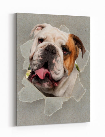 Bulldog Peeking through the Canvas Dog Scene Printed Canvas Print Picture - SPC188 - Art Fever - Art Fever