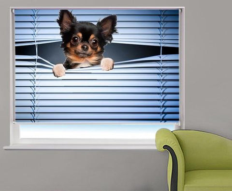 Chihuahua Peeking through the blind Printed Picture Photo Roller Blind - RB227 - Art Fever - Art Fever
