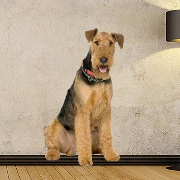 DCS20 - Large Airedale terrier removable wall sticker - Art Fever - Art Fever