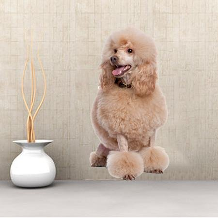 DCS24 - Large Apricot Poodle wall sticker - Art Fever - Art Fever