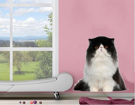 DCS38 - Large Persian cat removable wall decal - Art Fever - Art Fever
