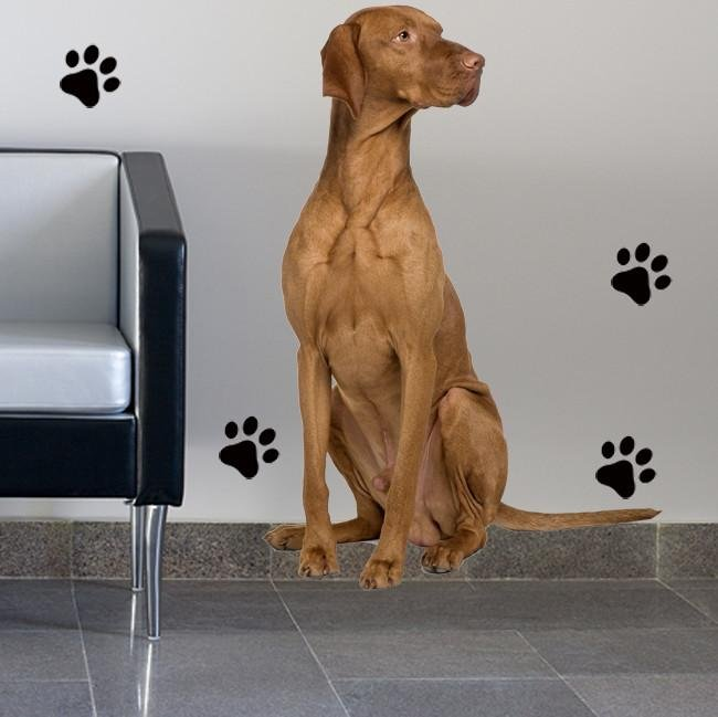 DCS6 - life size vizsla dog wall sticker - Art Fever - Art Fever