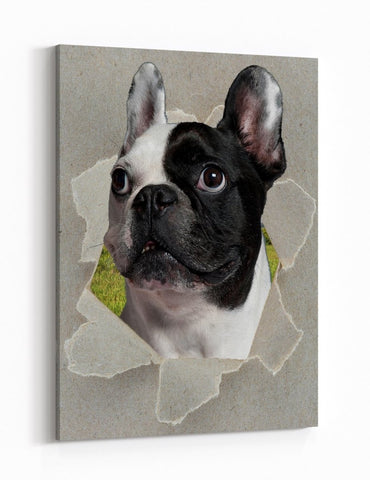 French Bulldog Peeking through the Canvas Dog Scene Printed Canvas Print Picture - SPC190 - Art Fever - Art Fever