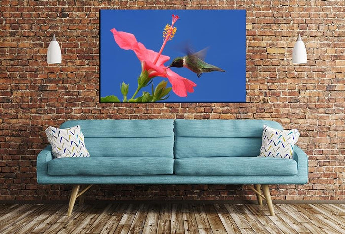 Hummingbird Image Printed Onto A Single Panel Canvas - SPC142 - Art Fever - Art Fever