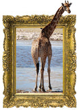 IPF7 - The Giraffe illusion picture frame wall decal - Art Fever - Art Fever