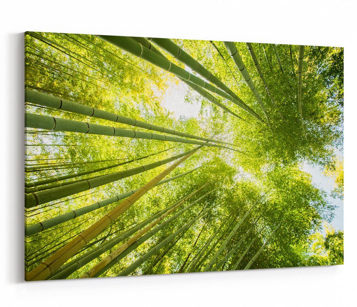 Low Angle View Of Bamboo Forest Canvas Print Picture - SPC249 - Art Fever - Art Fever
