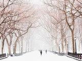 New York Central Park Snow Photo Printed Picture Roller Blind - RB579 - Art Fever - Art Fever