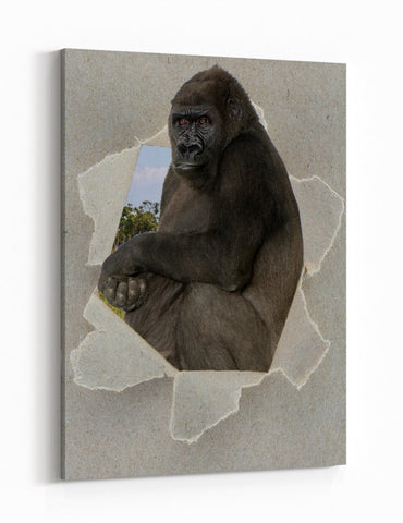 Silverback Gorilla Peeking through the Canvas Animal Scene Printed Canvas Print Picture - SPC191 - Art Fever - Art Fever