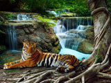 Tiger Lying Under Banyan tree next to jungle cascade Printed Picture Photo Roller Blind - RB712 - Art Fever - Art Fever