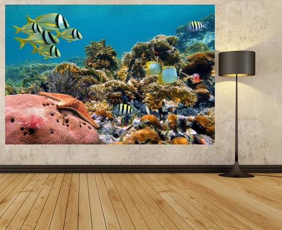 WM124 - COLOURFUL CORAL REEF WALL MURAL - Art Fever - Art Fever