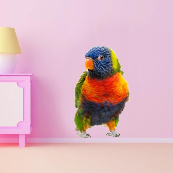 wsd183 - Large Australian rainbow lorikeet parrot animal removable wall sticker - Art Fever - Art Fever