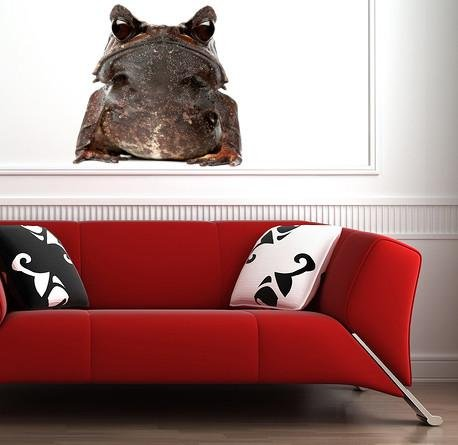 wsd215 - Large long nosed horned frog close up removable wall sticker - Art Fever - Art Fever