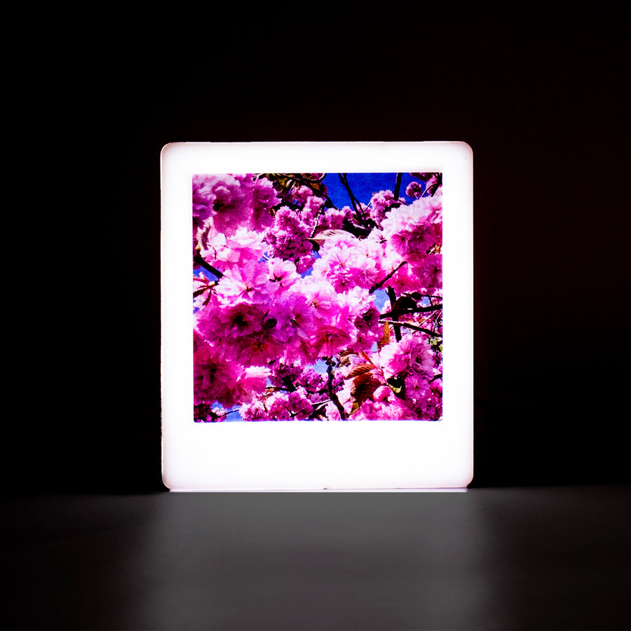 Mini Photo Light Box - Rose Gold - Locomocean