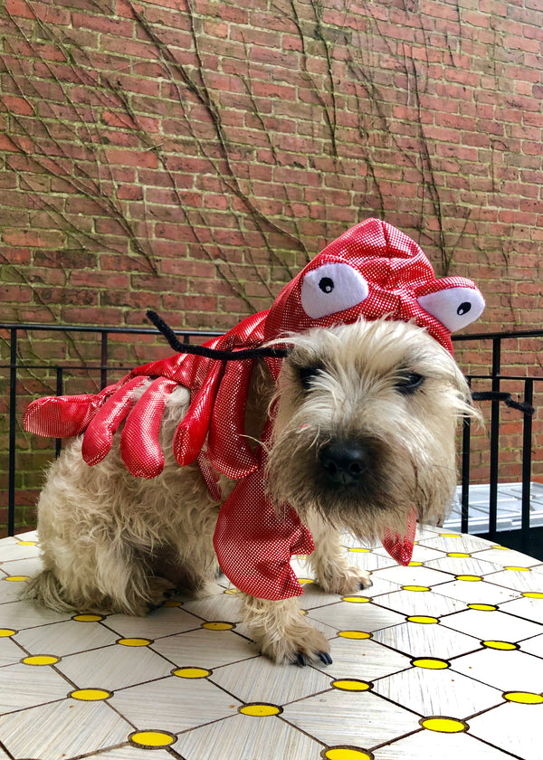 riptide reggie in lobster costume
