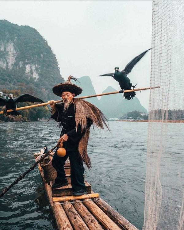 How to Fish with Cormorants