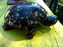 Carved Large Stone Turtle Black w/white spots