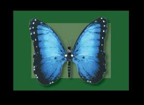 Moving BLUE MORPHO Butterfly