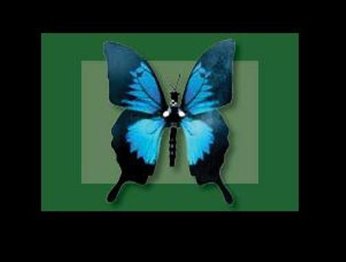 Moving Ulysses Butterfly