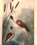 Pair of Bird Watercolours follower of James Audubon, signed Elsie Scott 1905