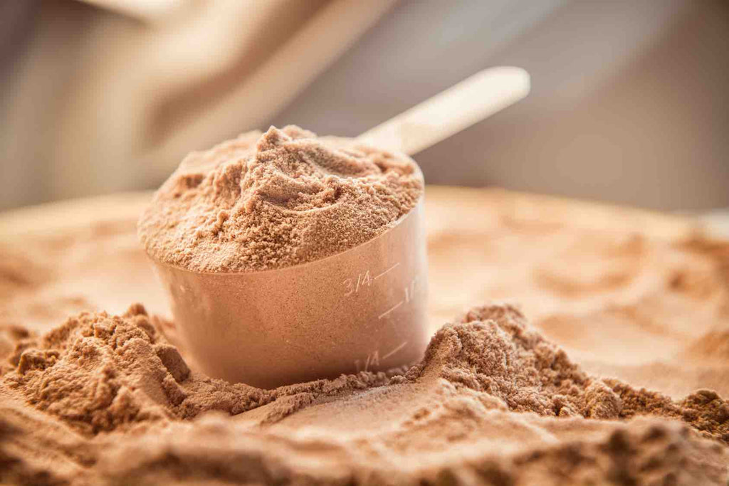 What Types of Protein Powder Should You Use?