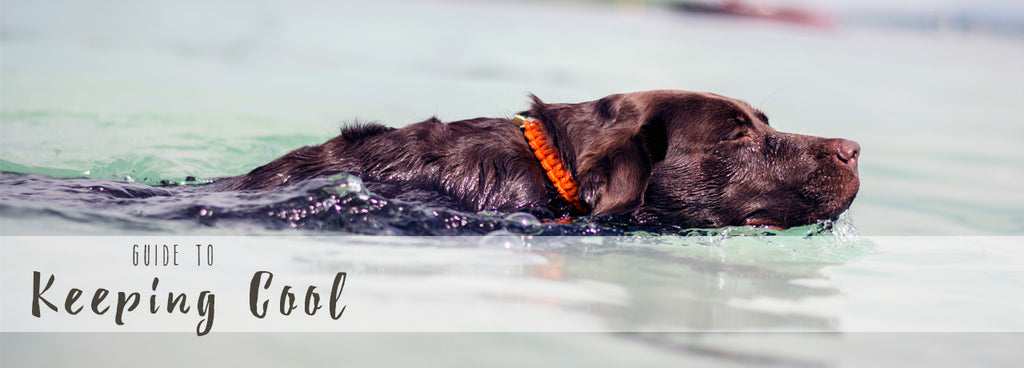 How To Keep Your Dog Cool This Summer...