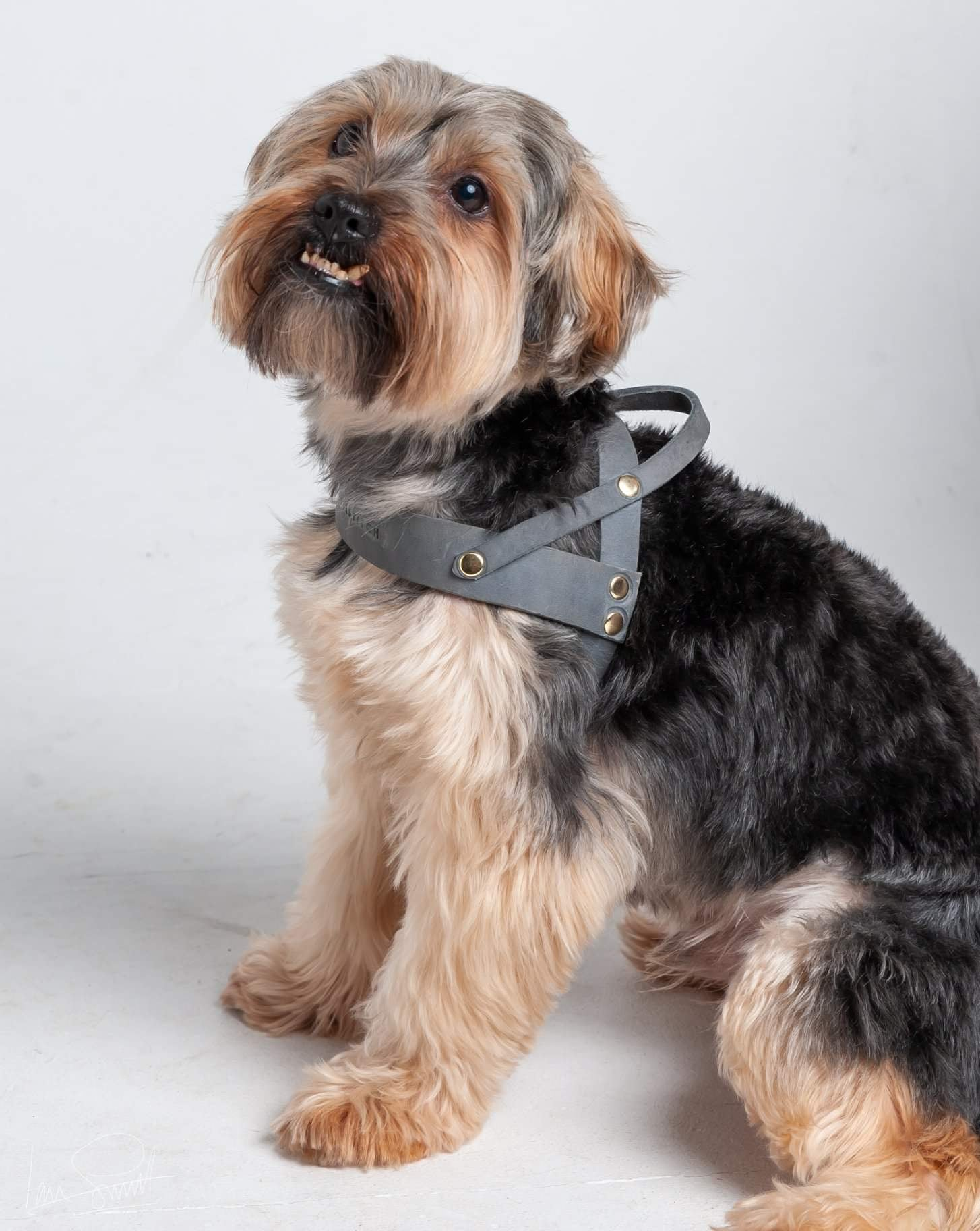 Butter Leather Dog Harness Timeless Grey