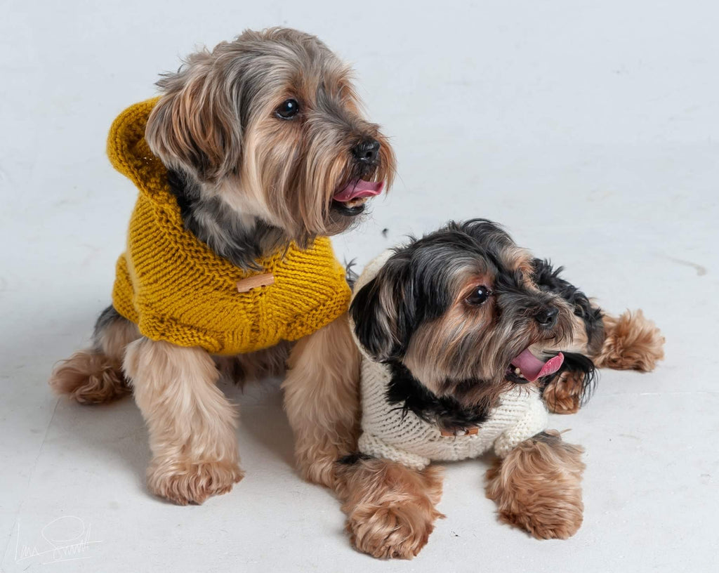 Stardust - Mustard Hooded Dog Jumper