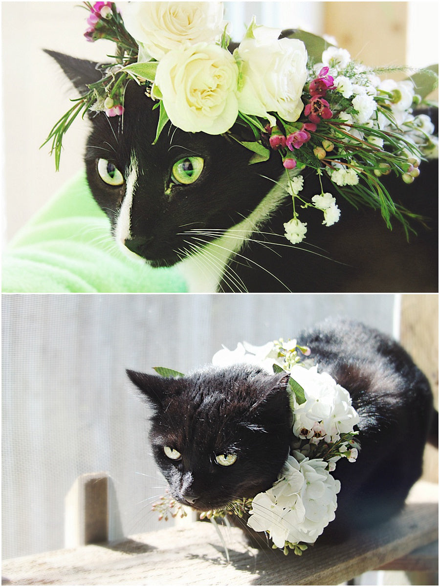 cat wreath wedding ceremony incorporating including pet flowers