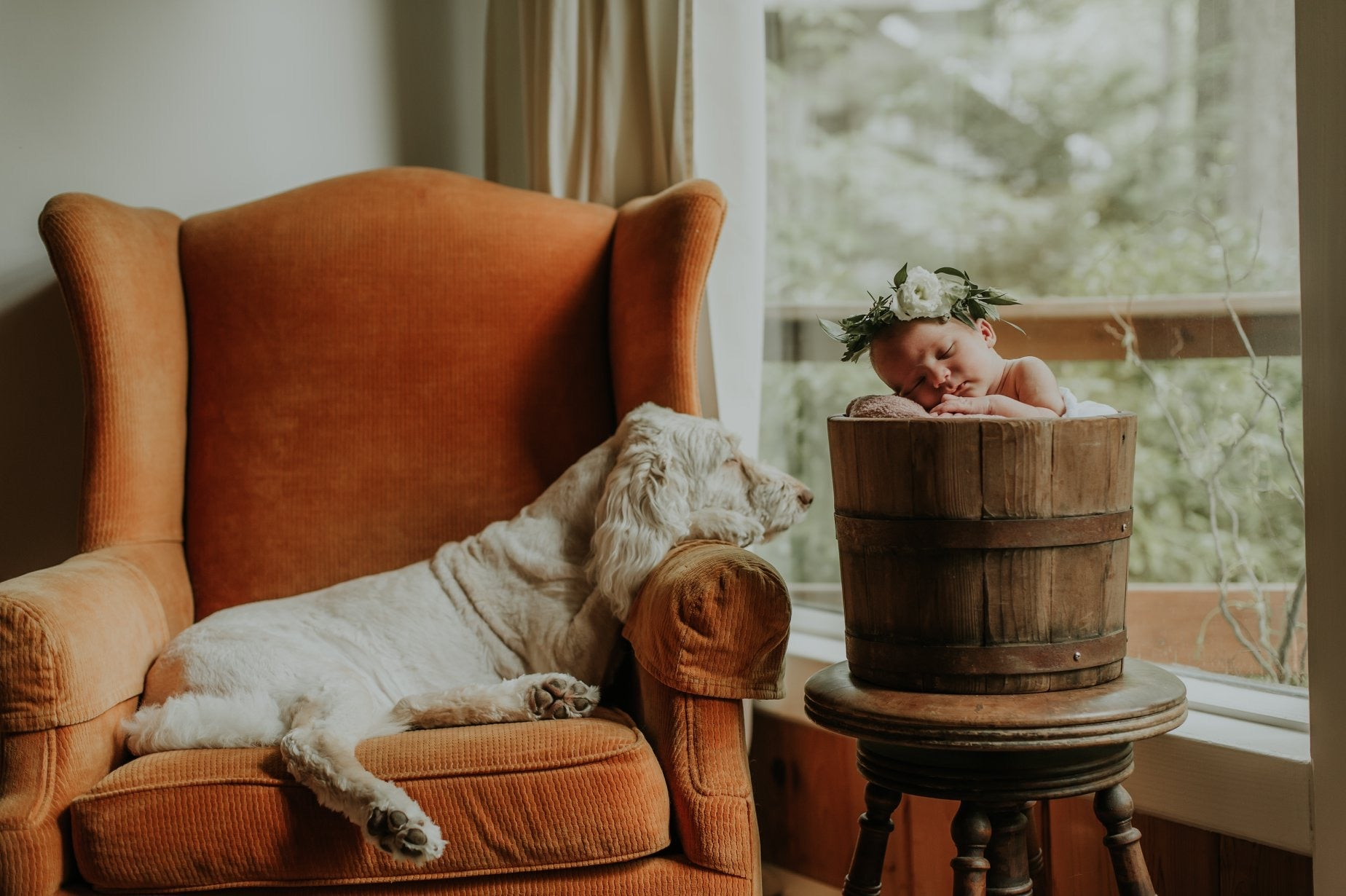 little miss lovely floral // leah adkins photography // flower crown & labradoodle newborn photos