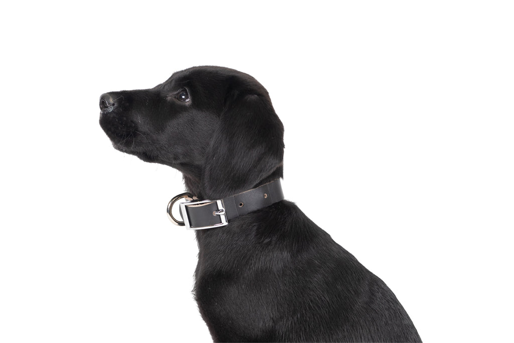 Genuine Leather Collar - Black